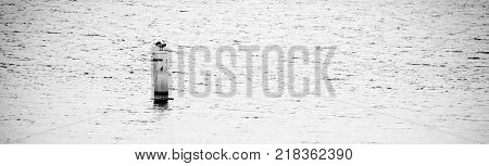 A seagull sitting on a buoy in Pohick Back near Mason Neck Virginia.