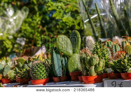 Group of small cactus in the pot / Cactus in the pot