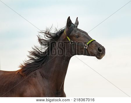 young purebred horse portrait over a sky background