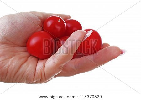 Woman hand holding tomato little tomatoes on isolated white cutout background. Studio photo with studio lighting easy to use for every concept.