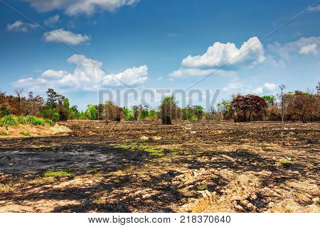 Slash And Burn Agriculture landscape in Thailand to prepare for rice field
