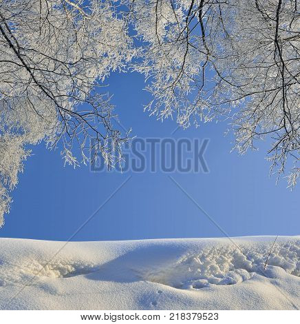 Birch branches covered with hoarfrost over a snowdrift against a blue sunny sky - beautiful natural winter background