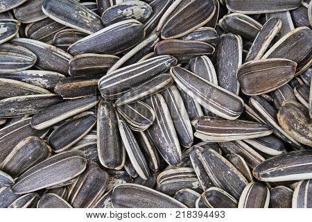 Sunflower seeds. Seeds with shell. Sunflower seed texture closeup pattern as background. Food photo.