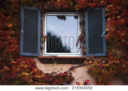 A wooden window surrounded by vine tendrils with window flaps.