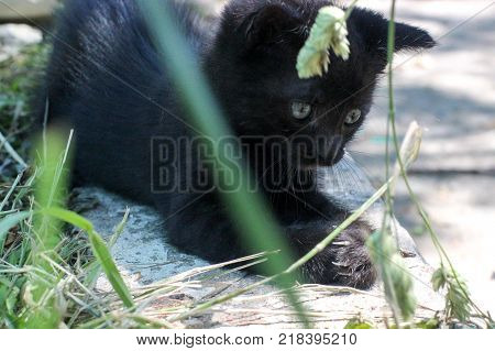 kitten playing, the stray kitten, kitten with a black color