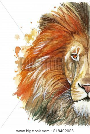 Watercolor drawing of a red lion, red mane, lion-king of beasts, portrait of greatness, strength, kingdom, india, in front of a white background