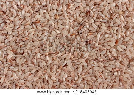 Red round-grain rice Samarkand close-up. Background texture.