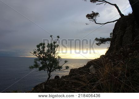 Lonely tree on the rocky mountain above the sea. Dramatic sunset sky with mountain landscape. Trees on the rocks.