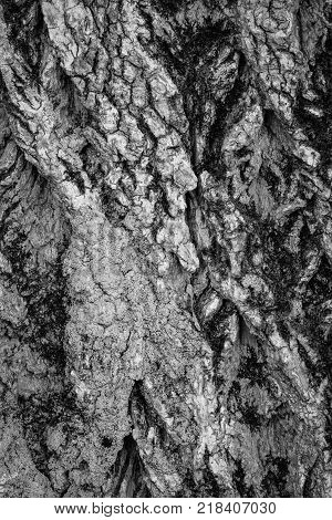 A close up of tree bark in black and white