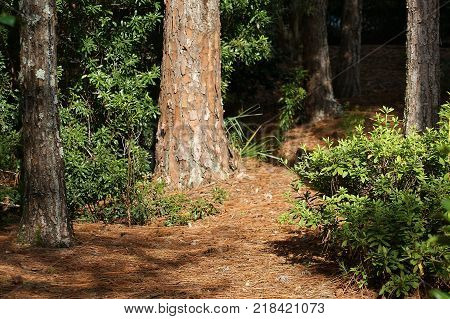 View of the bed of a forest with trees and plants