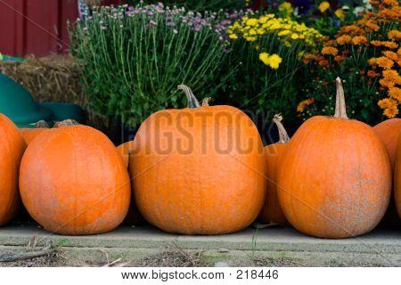 Pumpkin Line-up
