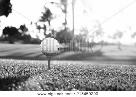 Golf ball on tee on golf course over a blurred green field at the sunset. Black and white