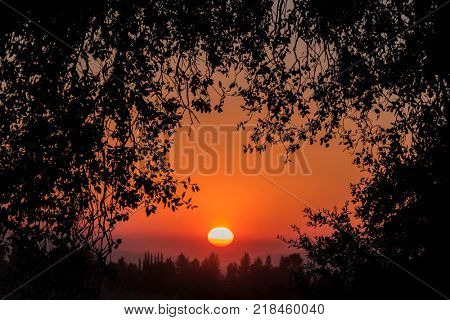 Canopy of California Oak leaves and rising sun at Santa Susana Pass State Historic Park in the San Fernando Valley area of Los Angeles, California.