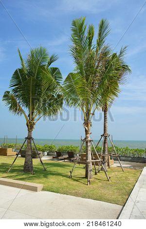 Palm tree growing up near the Hua Hin beach in Thailand