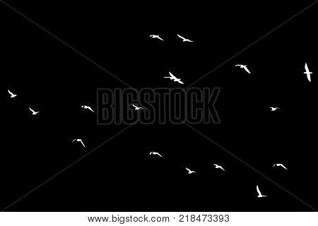 a flock of birds on a black background .