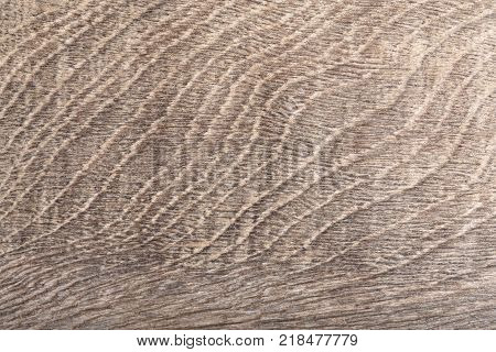 Texture of old scratched oak wood. Hi resolution photo.