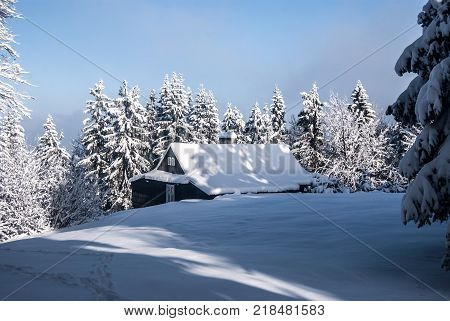 isolated chalet with trees around snow and clear sky near Bily Kriz in Moravskoslezske Beskydy mountains in Czech republic during nice winter day