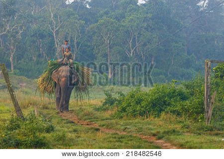 CHITWAN NEPAL - September 28 2013: Elephant and people at work at sunrise in the Royal Chitwan National Park. The park is 932 sq. km is mainly covered by jungle.