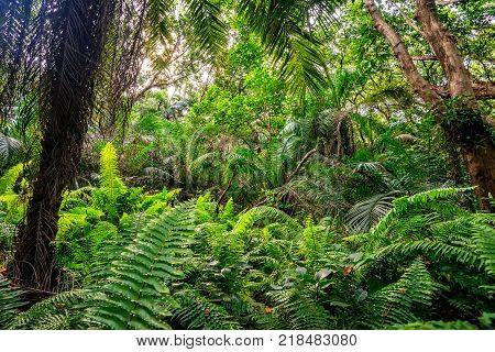 Scenic view of beautiful African jungle with lush foliage