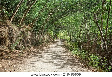 Pilgrim trail between Caldas de Reis and Padron on the Camino de Santiago trail, Galicia, Spain