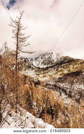 Spruce forest after natural disaster in High Tatras mountains Slovakia. Winter natural scene. Vertical composition. Yellow photo filter.