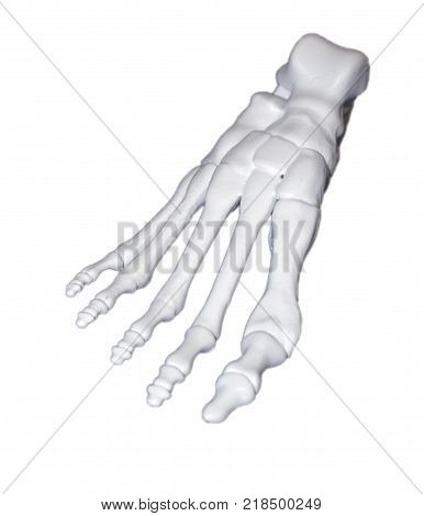 White prototype human foot skeleton printed on 3d printer. Isolated on white background. Fused deposition modeling, FDM. Progressive modern additive technology. Concept of 4.0 industrial revolution