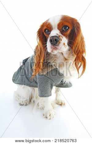 Dog coat. Puppy wearing winter coat. Dog Coat Jacket Pet Supplies Clothes Winter Apparel Clothing Puppy Costume. Elegant dog coat on isolated white studio photo. Cute.