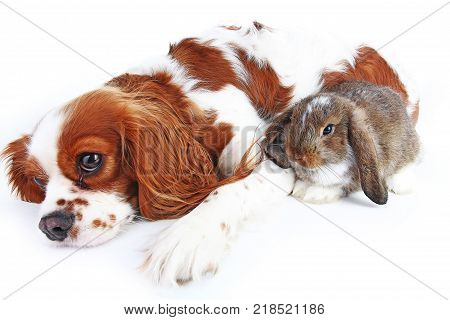 Animal friends. True pet friends. Dog rabbit bunny lop animals together on isolated white studio background. Pets love each other. Cute.