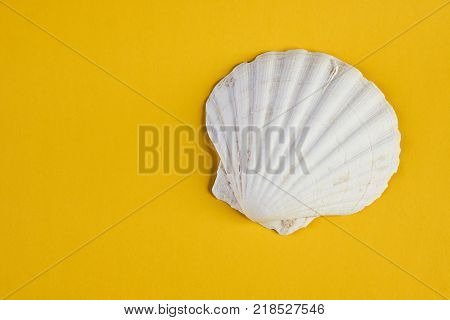 Close up of ocean shellfish sea shell isolated on yellow summer background with copy space, top view. Marine theme concept.