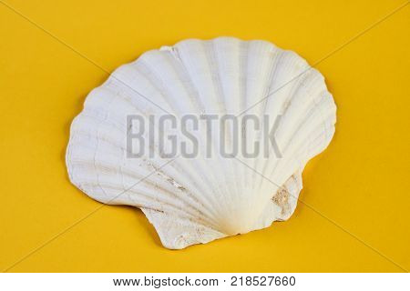 Close up of ocean shellfish sea shell isolated on yellow summer background, top view. Marine theme concept.