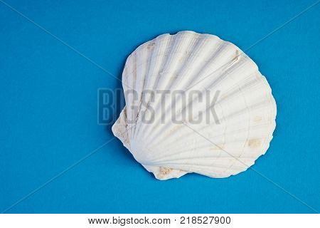 Close up of ocean shellfish sea shell isolated on blue summer background with copy space, top view. Marine theme concept.