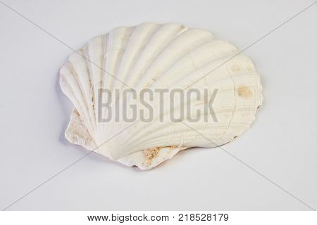 Close up of ocean shellfish sea shell isolated on white summer background. Marine theme concept.
