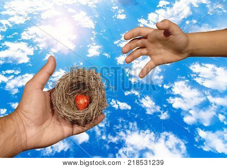 Human hands keep a natural nest with  a red heart inside and a child tries to reach this nest. Family bonds, protection, security, hope, solidarity.