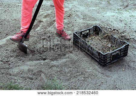 man digs a shovel with a shovel