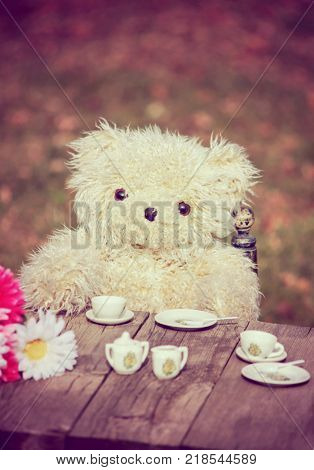 a cute teddy bear having a tea party in a backyard during summer, toned with a retro vintage instagram filter effect action or app