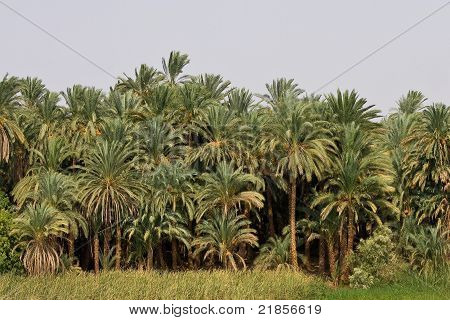 A view of tropical jungle