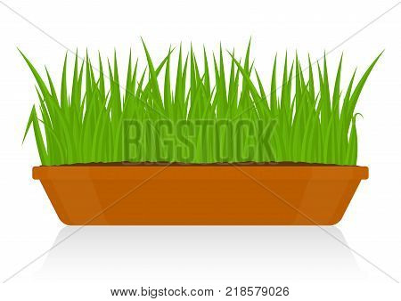 Vector illustration of fresh green grass in a clay pot isolated on white background. Potted plant in container for house decoration.