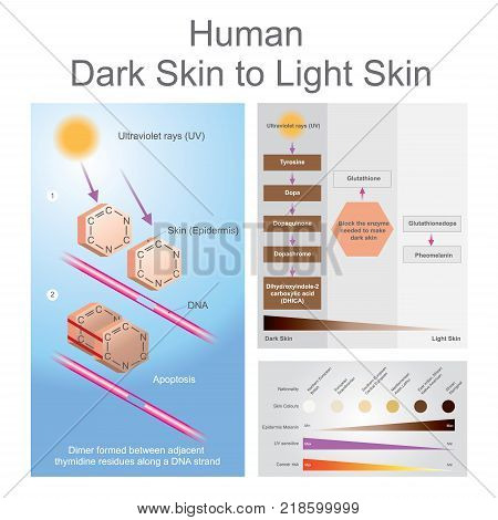Both ultraviolet can damage dan in the skin which can lead to skin cancer. Illustration.