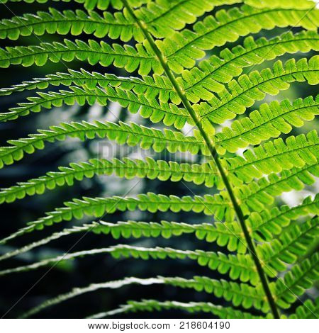 Fern leaf in the forests of Valaam island Karelia. Pteridium aquilinum eagle fern or common bracken. Aged photo. Summertime. Wild nature of Russian North. Natural background. Toned image.