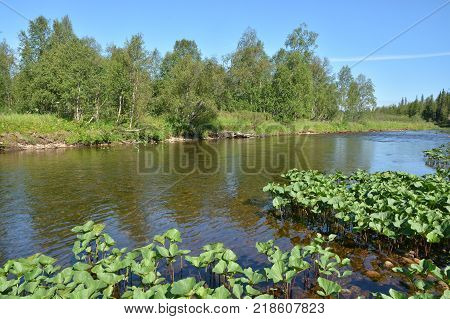 Taiga river in the Northern Urals. The national Park
