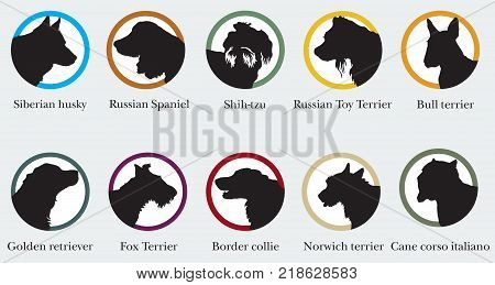 Vector set of ronds with portraits silhouettes of dog breeds. Colorful image