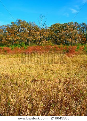 Rural southern Wisconsin scenery under autumn sunlight