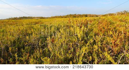 View of the Everglades National Park from the Coastal Prairie Trail