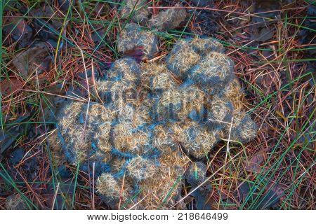 Horse manure background, frozen pellets of horse dung