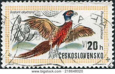 CZECHOSLOVAKIA - CIRCA 1971: A stamp printed in the Czechoslovakia dedicated to World Hunting Exhibition Budapest shows the Ring-necked Pheasant circa 1971