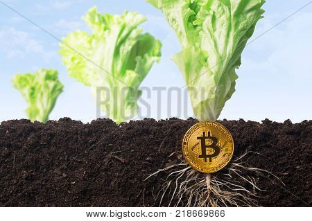 How to grow or get and earn on bitcoins. The bitcoin grows in the earth as the growth has taken root and the batwa. Growing bitcoin at home