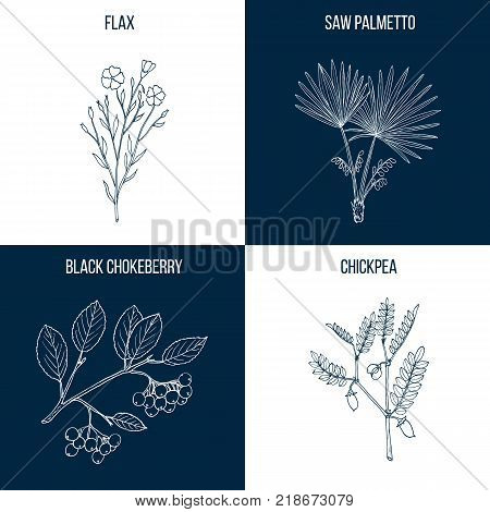Set of four hand drawn eatable and medicinal plants Vector illustration