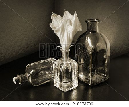 Cucurbita flower and three small vintage glass botlles. Low key still life in sepia tone. Choose a focal point copy space for write..