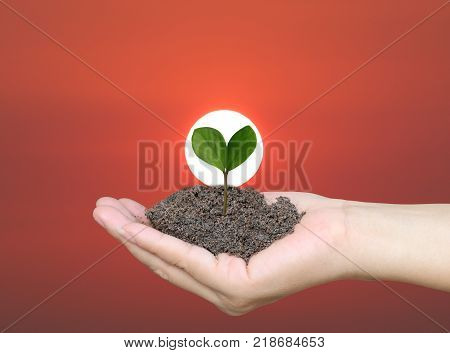 Green tree seedlings on hands of man in the concept of initiation and growth on sky in sunrise background.