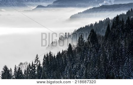 Wooded mountain slope in low lying valley fog with silhouettes of evergreen conifers shrouded in mist. Scenic snowy winter landscape in Alps, Bavaria, Germany.